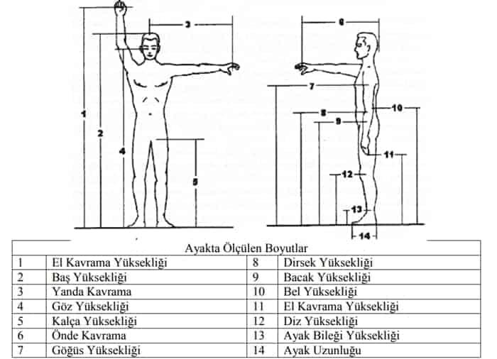 Antropometride İstatistiki Veriler 3