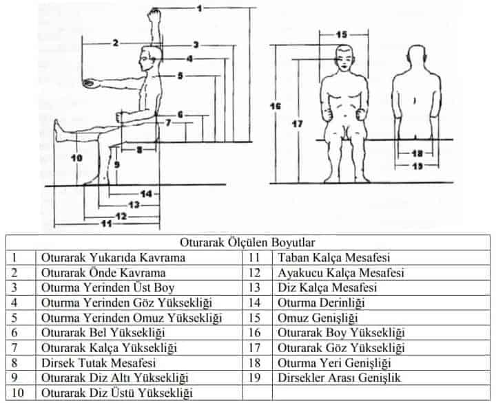 Antropometride İstatistiki Veriler 4