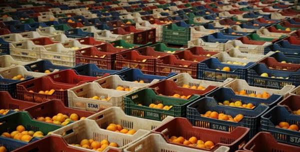 Sebze Meyve Sektörü Kontrol Listesi