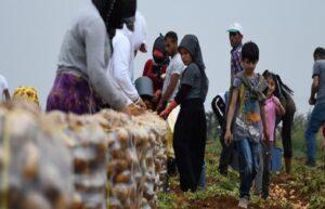 6 yılda 10 binden fazla kişi tarım ilaçlarından zehirlendi 3